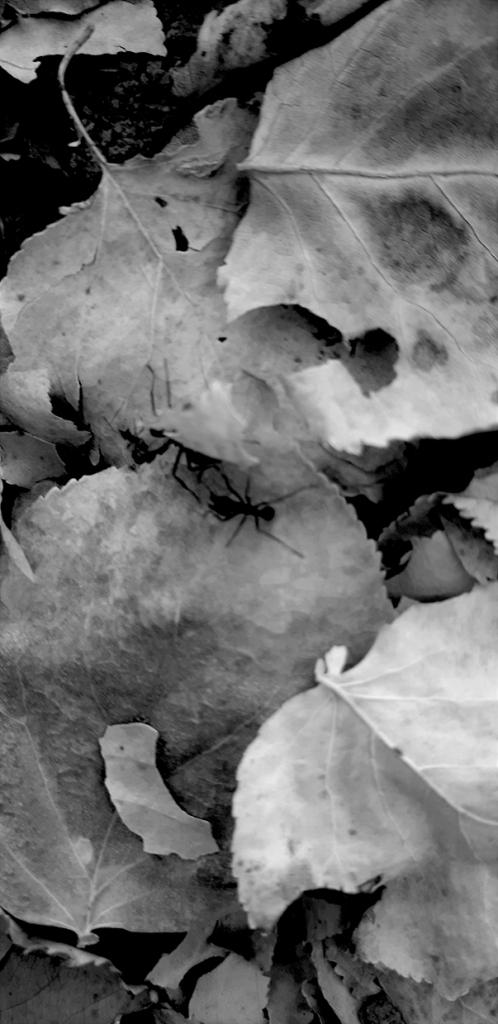 demetrio-navarro-del-angel-luces-y-sombras-v